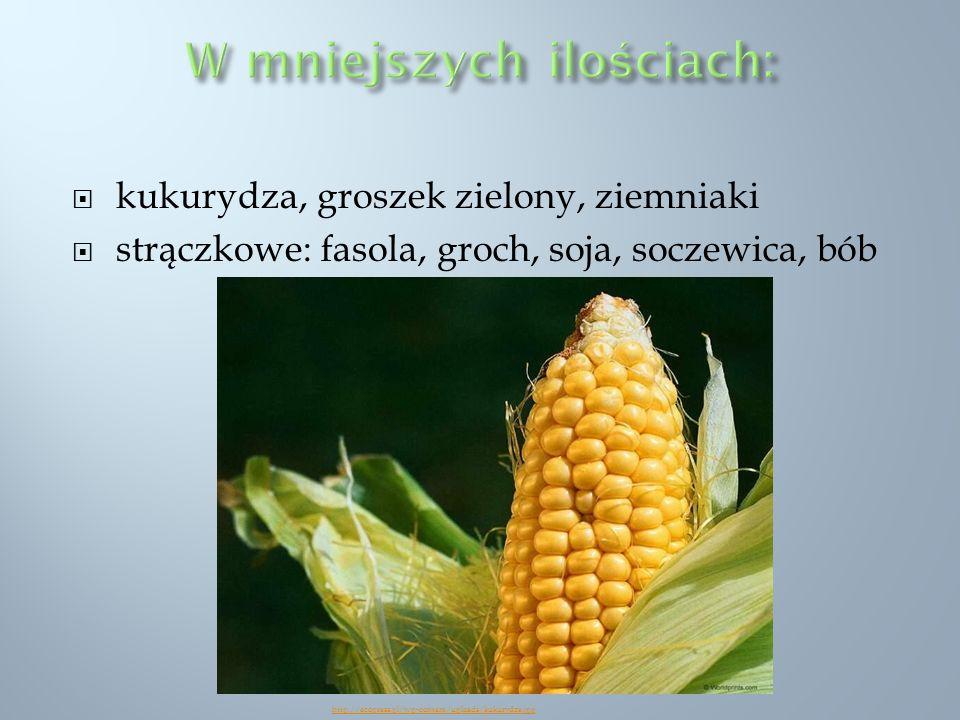 kukurydza, groszek zielony, ziemniaki strączkowe: fasola, groch, soja, soczewica, bób http://ecopress.pl/wp-content/uploads/kukurydza.jpg