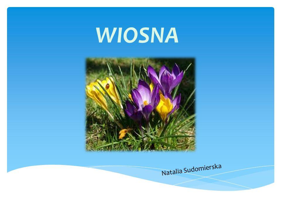 Wiosna jedna z czterech podstawowych pór roku w przyrodzie, w strefie klimatu umiarkowanego.