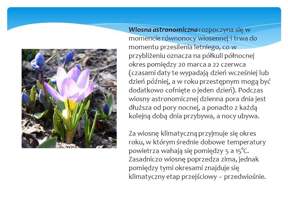 Za początek wiosny fenologicznej przyjmuje się początek wegetacji oraz kwitnienie przebiśniegów i krokusów.