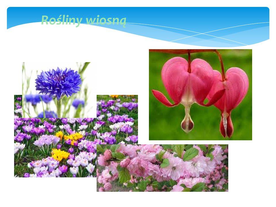 Wiosną zarówno fauna i flora budzą się do życia.