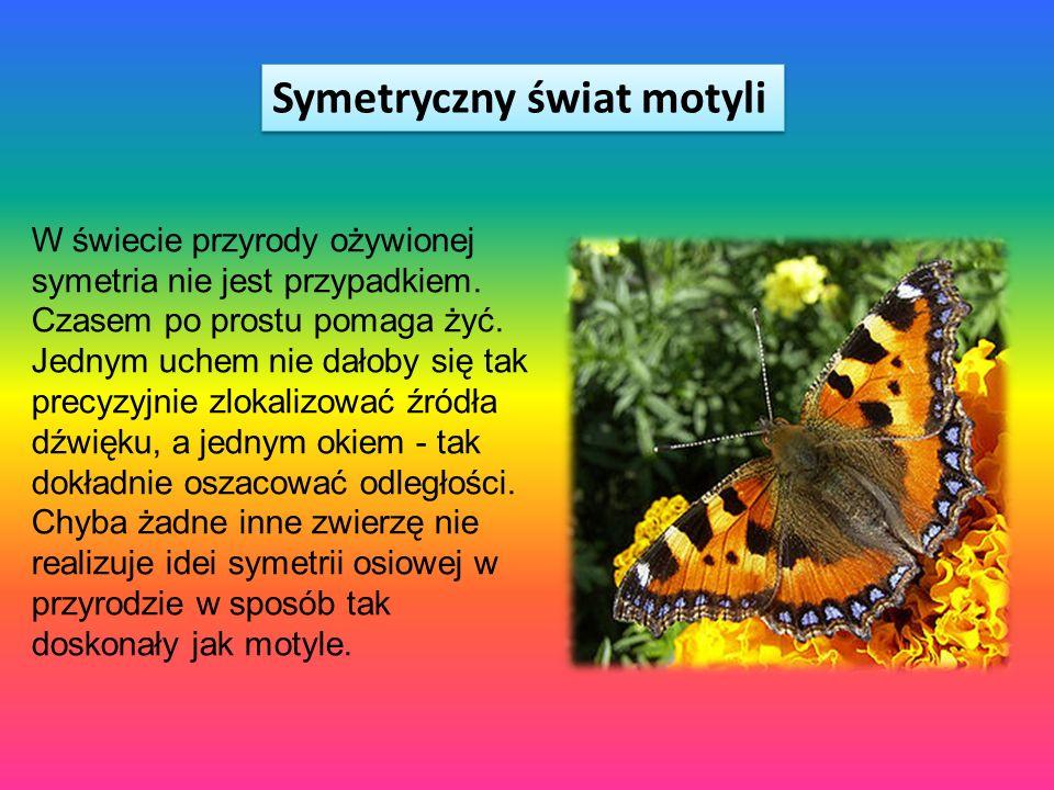 Symetryczny świat motyli W świecie przyrody ożywionej symetria nie jest przypadkiem. Czasem po prostu pomaga żyć. Jednym uchem nie dałoby się tak prec