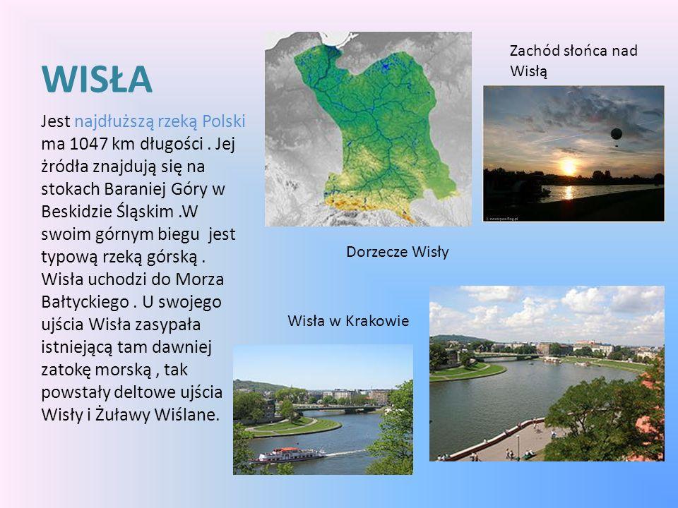 WISŁA Jest najdłuższą rzeką Polski ma 1047 km długości. Jej żródła znajdują się na stokach Baraniej Góry w Beskidzie Śląskim.W swoim górnym biegu jest