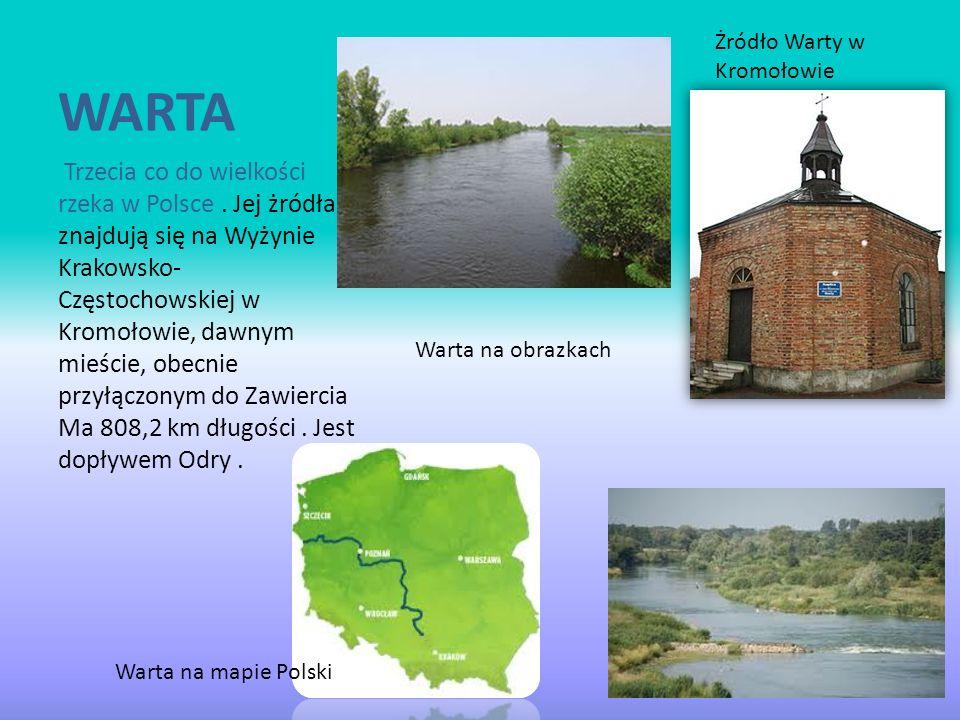 WARTA Trzecia co do wielkości rzeka w Polsce. Jej żródła znajdują się na Wyżynie Krakowsko- Częstochowskiej w Kromołowie, dawnym mieście, obecnie przy