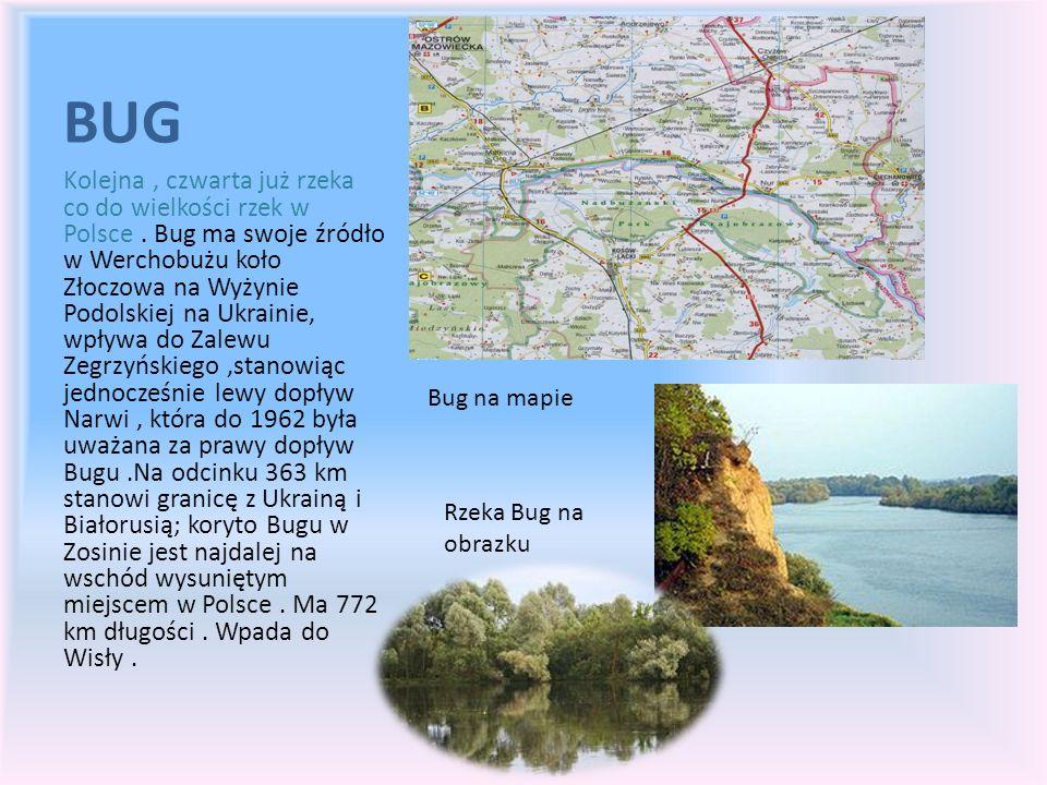 BUG Kolejna, czwarta już rzeka co do wielkości rzek w Polsce. Bug ma swoje źródło w Werchobużu koło Złoczowa na Wyżynie Podolskiej na Ukrainie, wpływa
