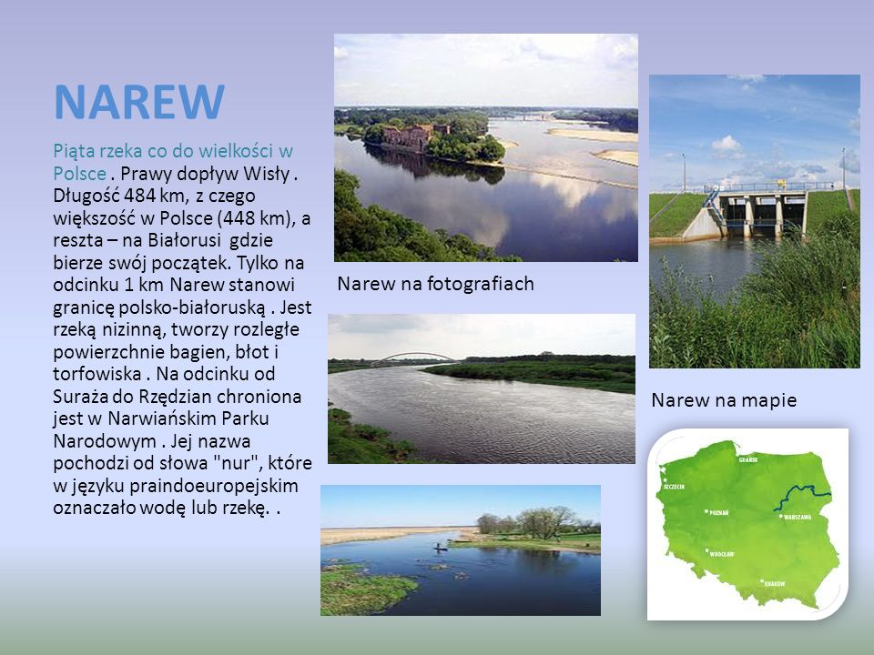 NAREW Piąta rzeka co do wielkości w Polsce. Prawy dopływ Wisły. Długość 484 km, z czego większość w Polsce (448 km), a reszta – na Białorusi gdzie bie