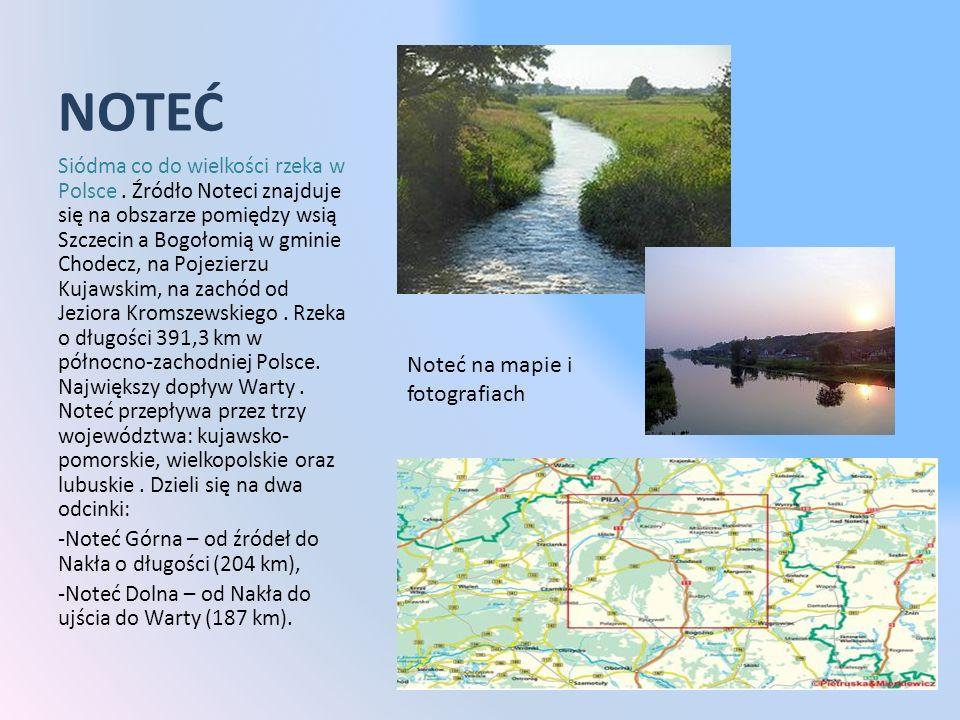 NOTEĆ Siódma co do wielkości rzeka w Polsce. Źródło Noteci znajduje się na obszarze pomiędzy wsią Szczecin a Bogołomią w gminie Chodecz, na Pojezierzu