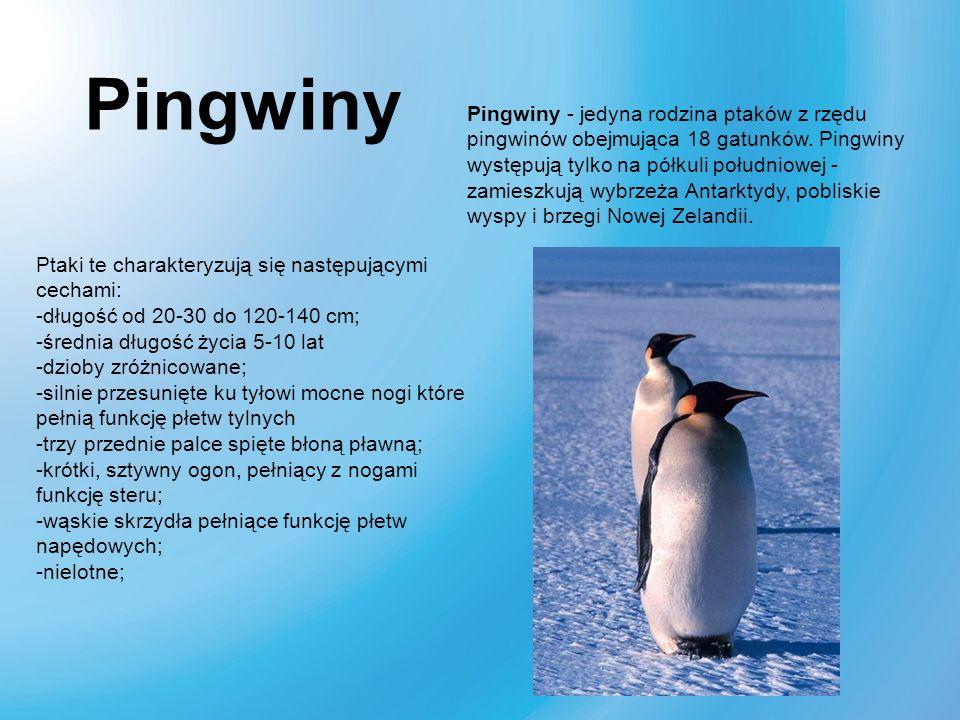 Pingwiny Pingwiny - jedyna rodzina ptaków z rzędu pingwinów obejmująca 18 gatunków. Pingwiny występują tylko na półkuli południowej - zamieszkują wybr