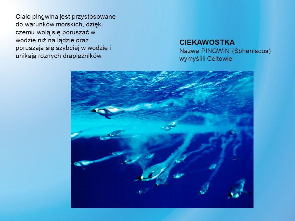 Ciało pingwina jest przystosowane do warunków morskich, dzięki czemu wolą się poruszać w wodzie niż na lądzie oraz poruszają się szybciej w wodzie i u