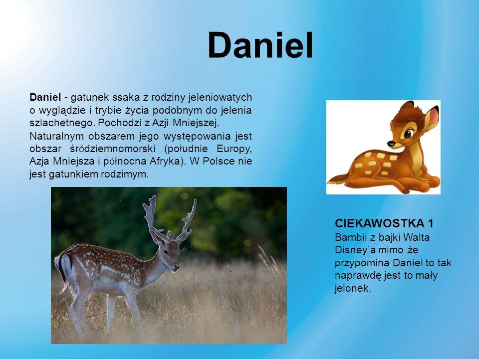 Daniel - gatunek ssaka z rodziny jeleniowatych o wyglądzie i trybie życia podobnym do jelenia szlachetnego. Pochodzi z Azji Mniejszej. Naturalnym obsz