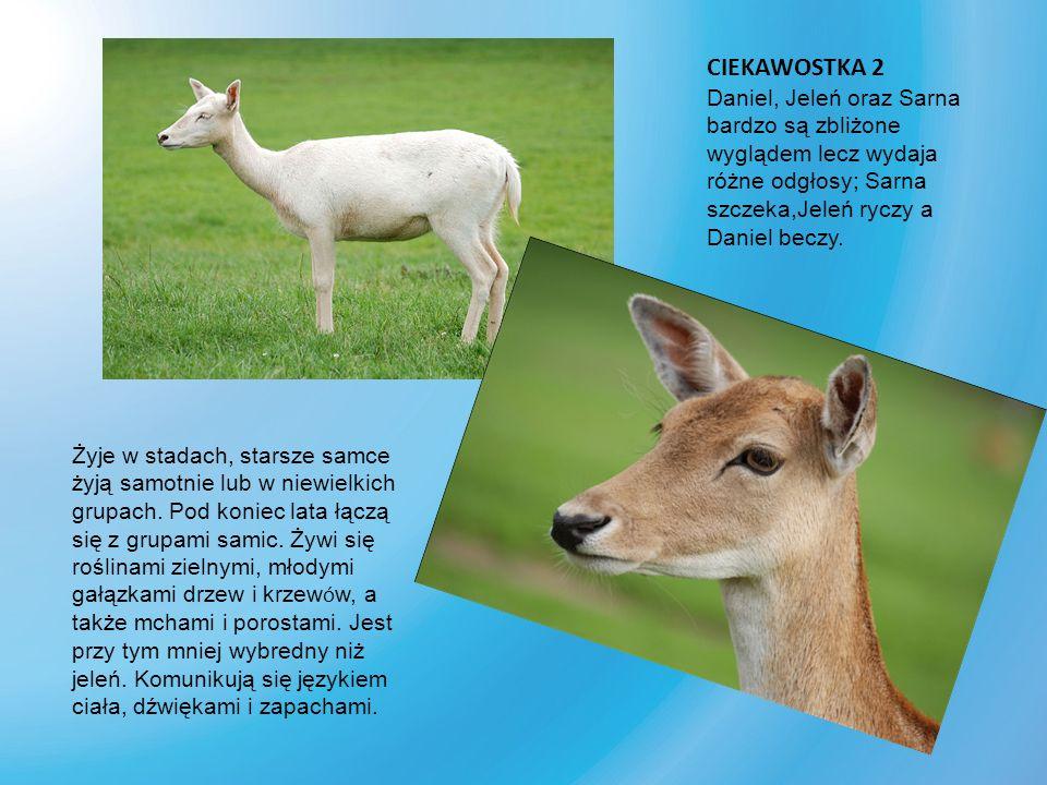 Żubr – gatunek łożyskowca z rodziny krętorogich, rzędu parzystokopytnych.
