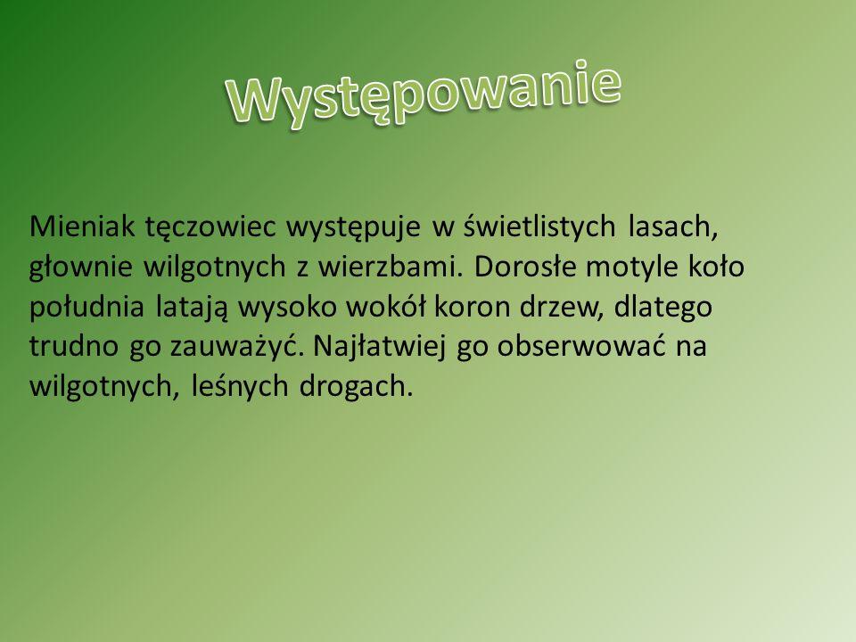 https://www.google.pl/search?hl=pl&site=imghp&tbm=isch&source =hp&biw=1120&bih=594&q=winniczek&oq=winniczek&gs_l=img.3..