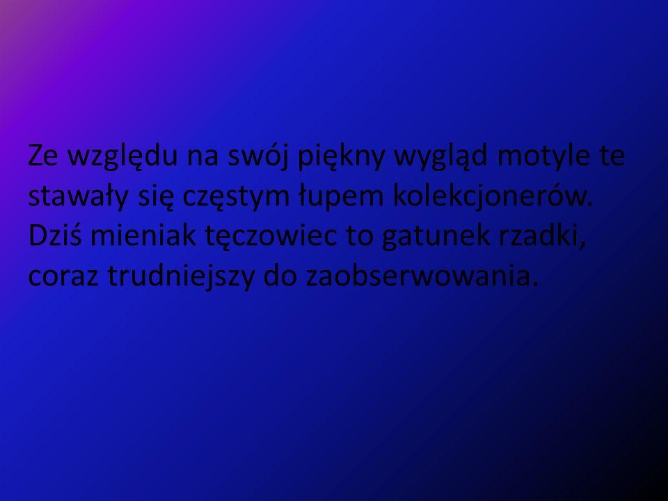 https://www.google.pl/search?q=mieniak+t%C4%99czowiec&hl=pl&tbm=isch&t bo=u&source=univ&sa=X&ei=HsR7UfbyC4eo4gTfrIGQCQ&sqi=2&ved=0CDMQsA Q&biw=1024&bih=610#imgrc=6y7vk9097_Q3dM%3A%3BKut0MRlTfII6CM%3Bht tp%253A%252F%252Fth.interia.pl%252F50%252Cgfd235ac23923459%252Fi117 1162.jpg%3Bhttp%253A%252F%252Fgaleria.interia.pl%252Fpraca%252Cw_id%2 52C1048475%252Cref%252C1%252CMieniak%252Bt%2525EAczowiec%3B500%3 B332 http://arus24.w.interia.pl/menu3/bezkregowce.html http://mlodziez.erys.pl/lesnoteka/owady/mieniak_teczowieC.PL