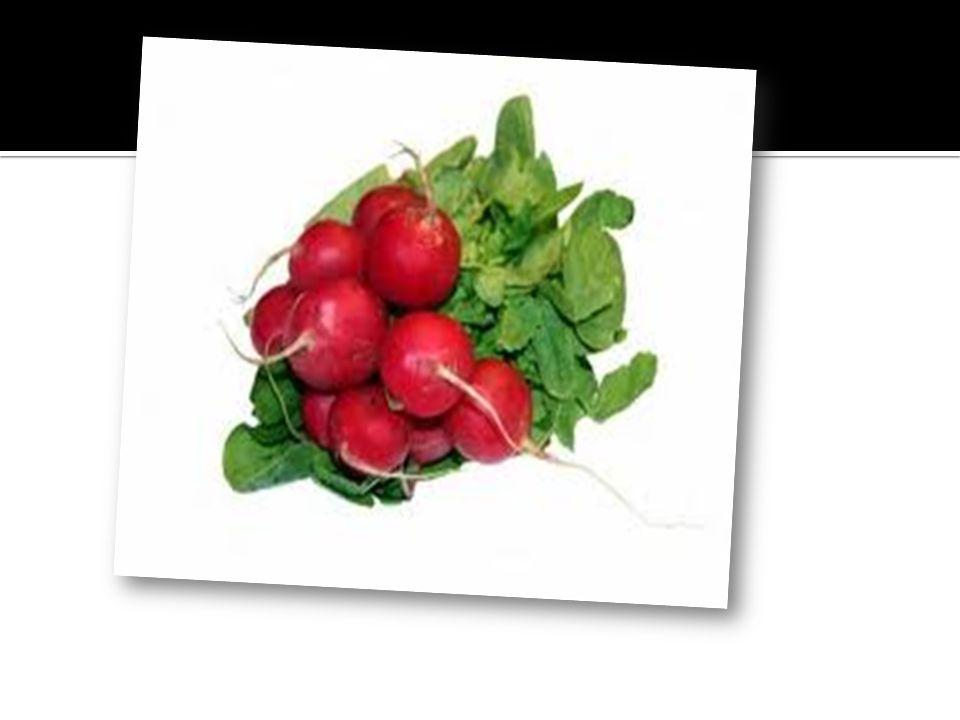 rodzaj roślin jednorocznych z rodziny astrowatych (Asteraceae).