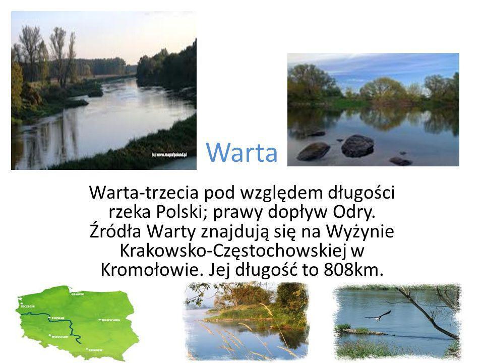 Warta Warta-trzecia pod względem długości rzeka Polski; prawy dopływ Odry.