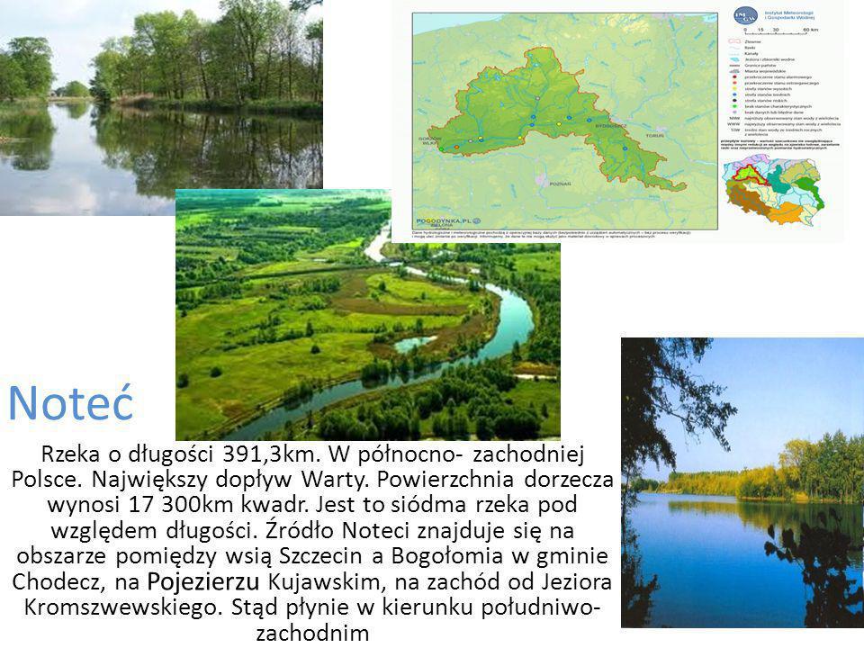 Noteć Rzeka o długości 391,3km.W północno- zachodniej Polsce.