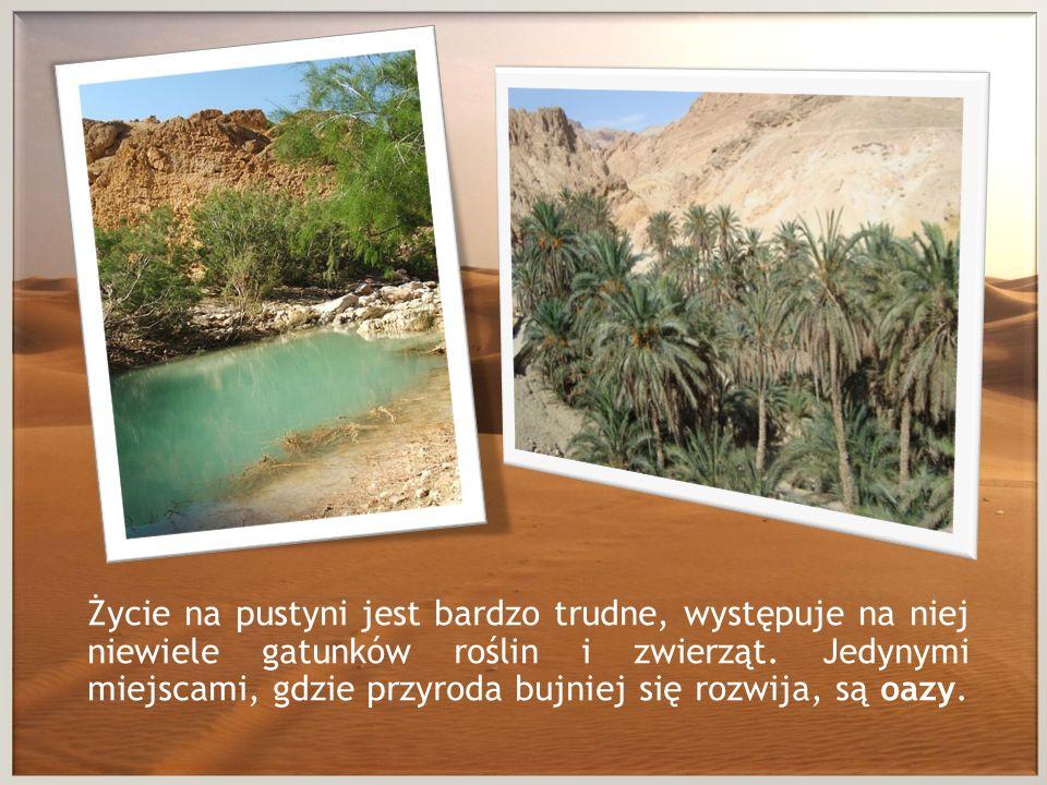 Życie na pustyni jest bardzo trudne, występuje na niej niewiele gatunków roślin i zwierząt. Jedynymi miejscami, gdzie przyroda bujniej się rozwija, są