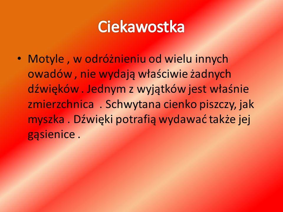Wykonała : Justyna Muszańska.Klasa 1 gimnazjum.