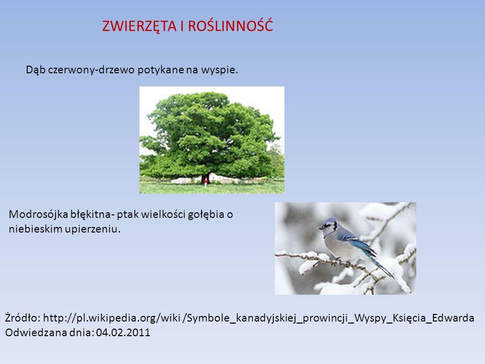 ZWIERZĘTA I ROŚLINNOŚĆ Dąb czerwony-drzewo potykane na wyspie. Modrosójka błękitna- ptak wielkości gołębia o niebieskim upierzeniu. Żródło: http://pl.