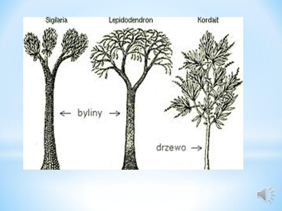 Do kopalnych paprotników należą Lepidodendrony, Sigilarie i Kalamity. W dzisiejszych czasach paprotniki nie odgrywają znaczącej roli w różnych bioceno
