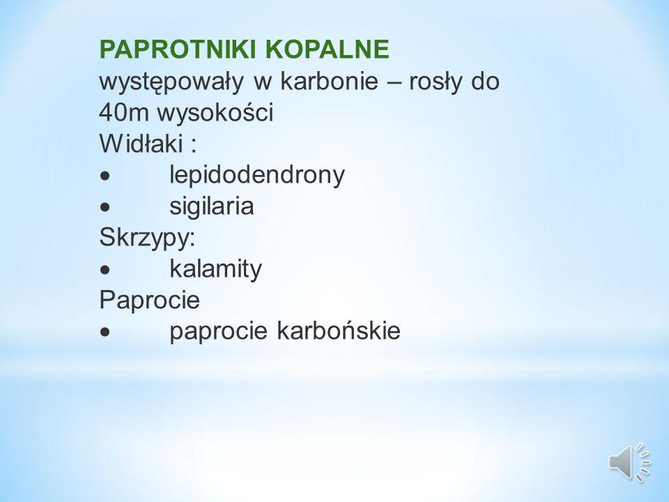 PAPROTNIKI KOPALNE występowały w karbonie – rosły do 40m wysokości Widłaki : lepidodendrony sigilaria Skrzypy: kalamity Paprocie paprocie karbońskie