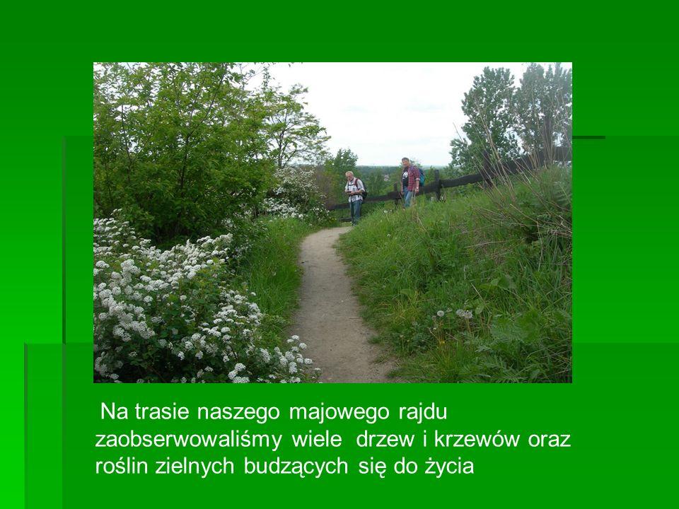 Na trasie naszego majowego rajdu zaobserwowaliśmy wiele drzew i krzewów oraz roślin zielnych budzących się do życia