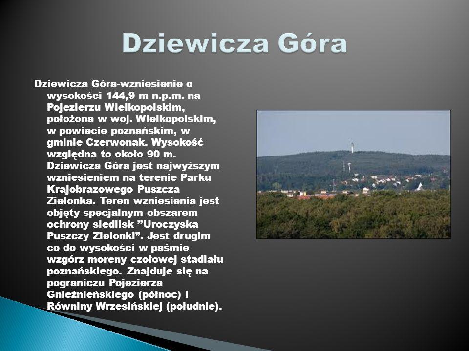 Dziewicza Góra-wzniesienie o wysokości 144,9 m n.p.m. na Pojezierzu Wielkopolskim, położona w woj. Wielkopolskim, w powiecie poznańskim, w gminie Czer