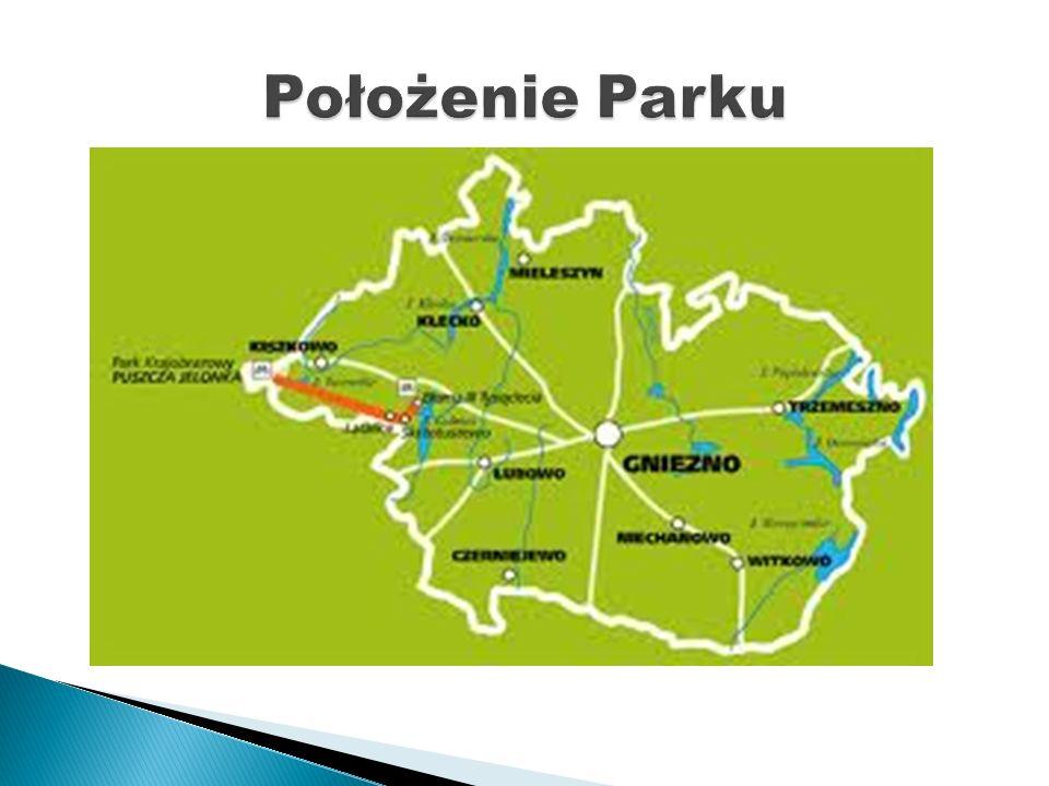 Park Krajobrazowy Puszcza Zielonka leży na północny wschód od Poznania i obejmuje środkową część atrakcyjnego przyrodniczo, krajobrazowo i turystycznie terenu zwanego potocznie Puszczą Zielonką – w obszarze ograniczonym miejscowościami: Poznań, Murowana Goślina, Skoki, Kiszkowo, Pobiedziska.