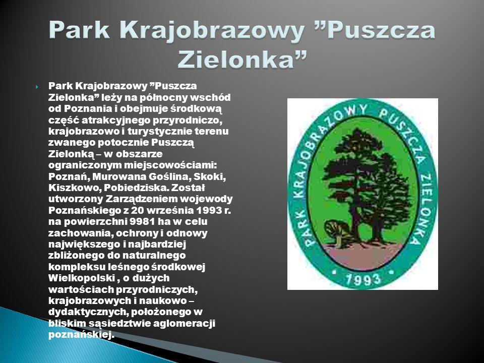 Park Krajobrazowy Puszcza Zielonka leży na północny wschód od Poznania i obejmuje środkową część atrakcyjnego przyrodniczo, krajobrazowo i turystyczni