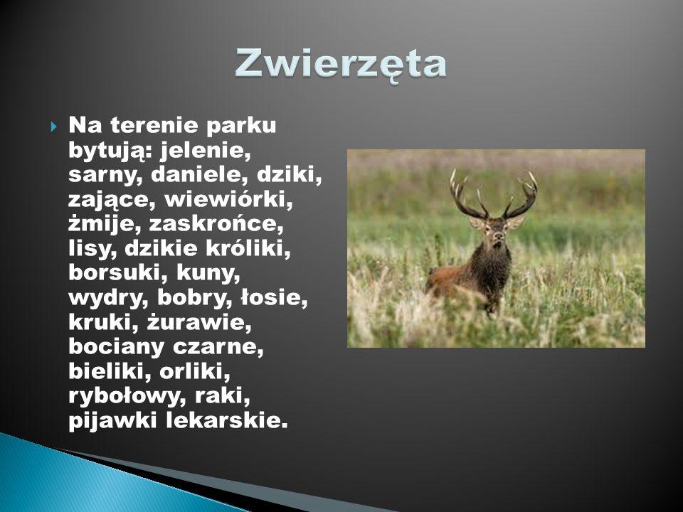 Na terenie parku bytują: jelenie, sarny, daniele, dziki, zające, wiewiórki, żmije, zaskrońce, lisy, dzikie króliki, borsuki, kuny, wydry, bobry, łosie