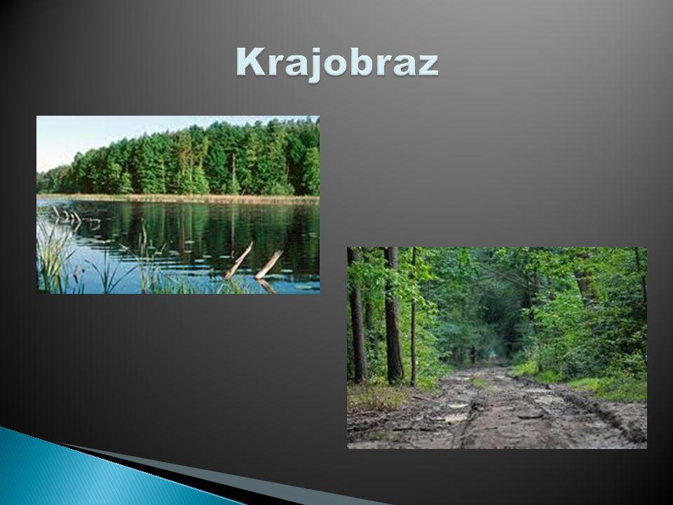 www.Wikipedia.pl www.Google/grafika.pl