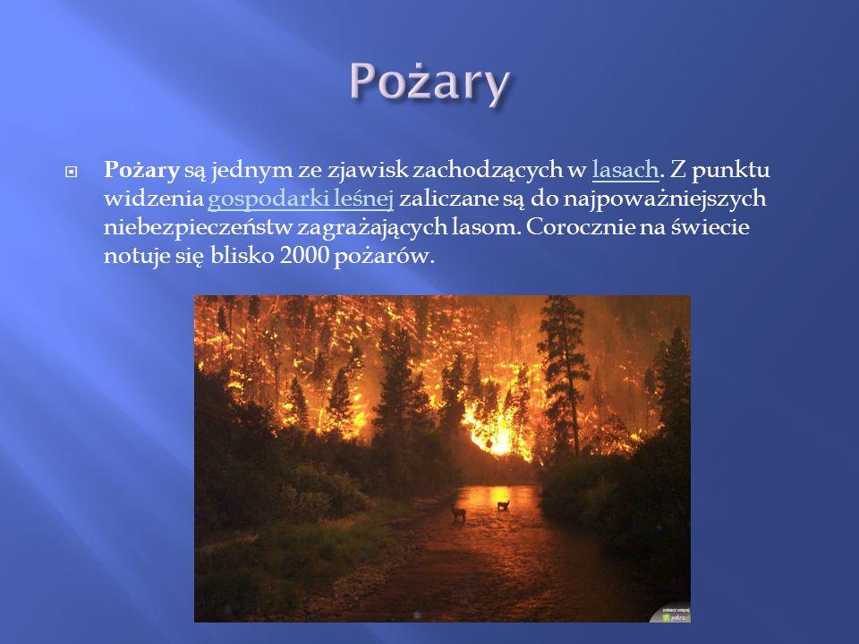 Pożary są jednym ze zjawisk zachodzących w lasach. Z punktu widzenia gospodarki leśnej zaliczane są do najpoważniejszych niebezpieczeństw zagrażającyc