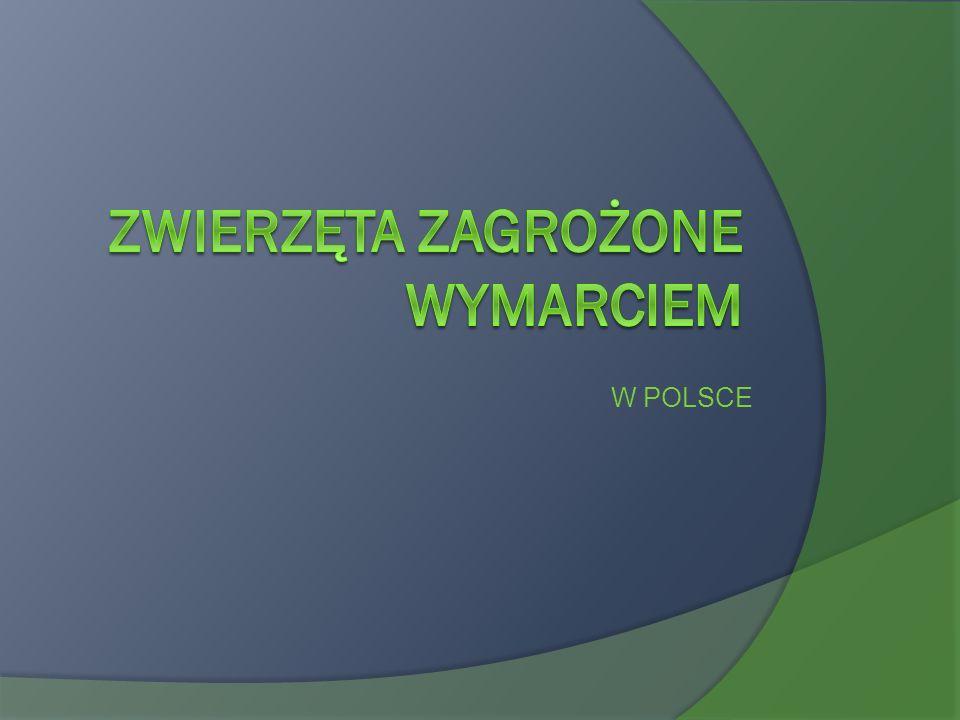 Polska Czerwona Księga Zwierząt W tym bardzo ważnym dokumencie znajduje się spis zwierząt zagrożonych wyginięciem w Polsce.