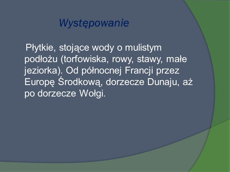 Występowanie Płytkie, stojące wody o mulistym podłożu (torfowiska, rowy, stawy, małe jeziorka). Od północnej Francji przez Europę Środkową, dorzecze D