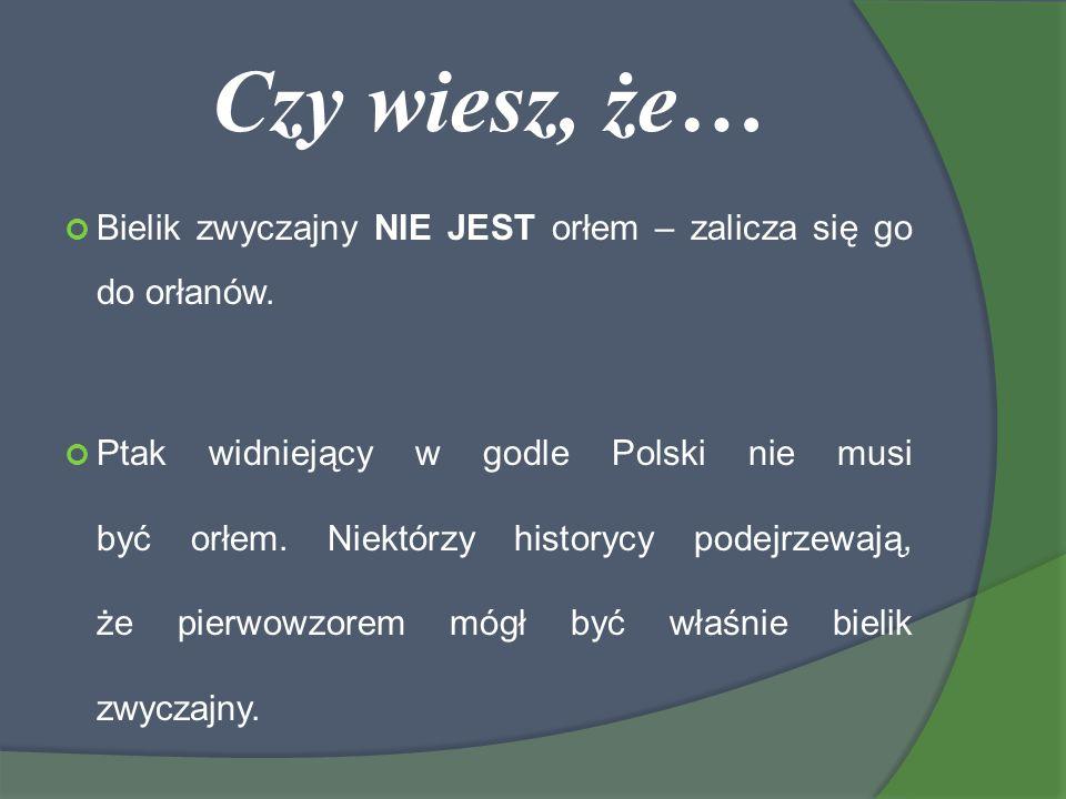 Czy wiesz, że… Bielik zwyczajny NIE JEST orłem – zalicza się go do orłanów. Ptak widniejący w godle Polski nie musi być orłem. Niektórzy historycy pod