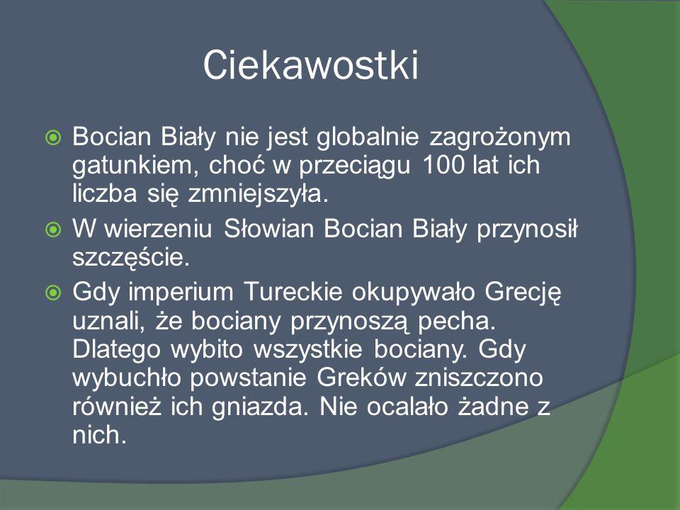 Ciekawostki Bocian Biały nie jest globalnie zagrożonym gatunkiem, choć w przeciągu 100 lat ich liczba się zmniejszyła. W wierzeniu Słowian Bocian Biał