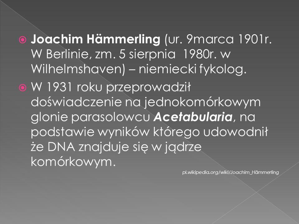 Joachim Hämmerling (ur.9marca 1901r. W Berlinie, zm.