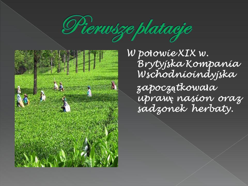 W po ł owie XIX w. Brytyjska Kompania Wschodnioindyjska zapocz ą tkowa ł a upraw ę nasion oraz sadzonek herbaty.