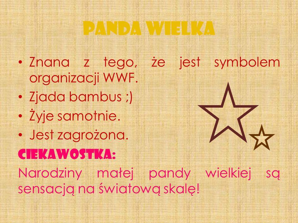 Znana z tego, że jest symbolem organizacji WWF.Zjada bambus ;) Żyje samotnie.