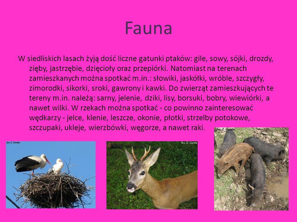 Fauna W siedliskich lasach żyją dość liczne gatunki ptaków: gile, sowy, sójki, drozdy, zięby, jastrzębie, dzięcioły oraz przepiórki.