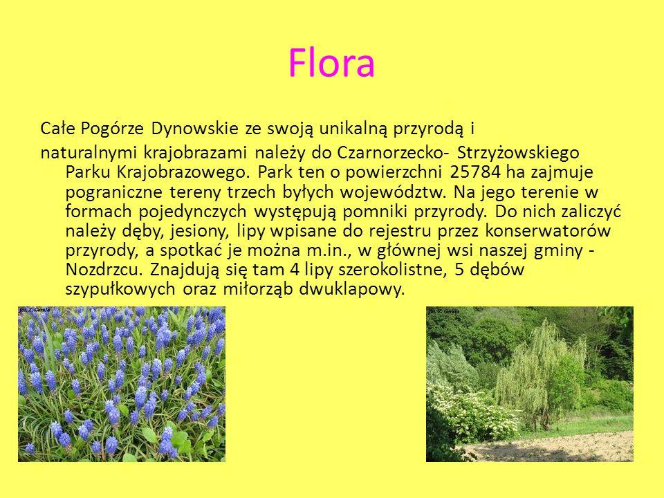 Flora Całe Pogórze Dynowskie ze swoją unikalną przyrodą i naturalnymi krajobrazami należy do Czarnorzecko- Strzyżowskiego Parku Krajobrazowego. Park t