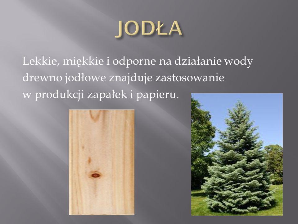 Lekkie, miękkie i odporne na działanie wody drewno jodłowe znajduje zastosowanie w produkcji zapałek i papieru.