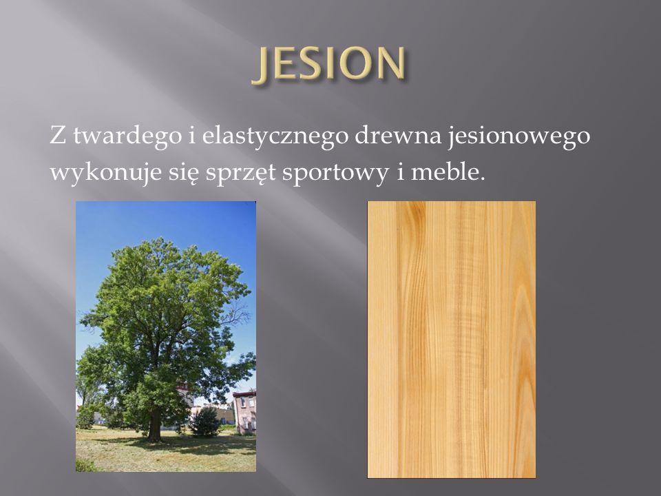 Z twardego i elastycznego drewna jesionowego wykonuje się sprzęt sportowy i meble.