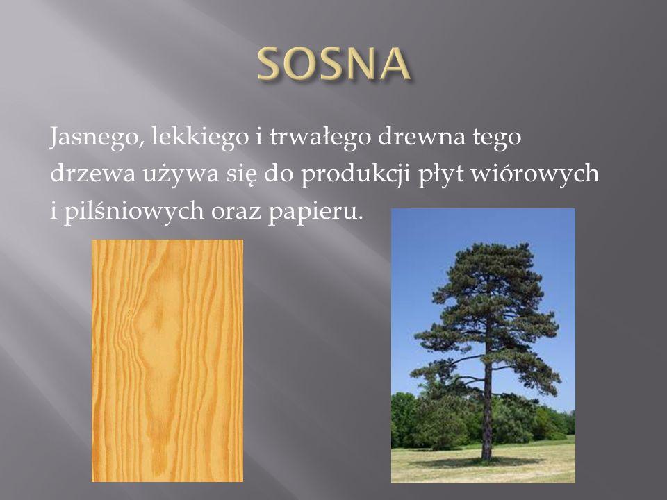 Jasnego, lekkiego i trwałego drewna tego drzewa używa się do produkcji płyt wiórowych i pilśniowych oraz papieru.