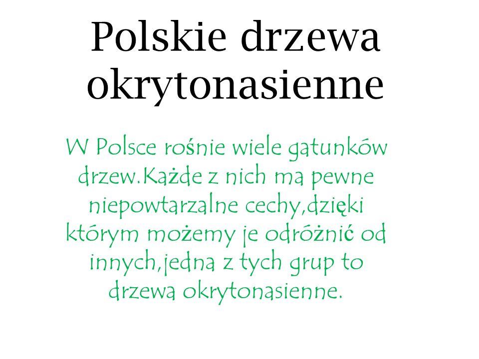 Polskie drzewa okrytonasienne W Polsce ro ś nie wiele gatunków drzew.Ka ż de z nich ma pewne niepowtarzalne cechy,dzi ę ki którym mo ż emy je odró ż n