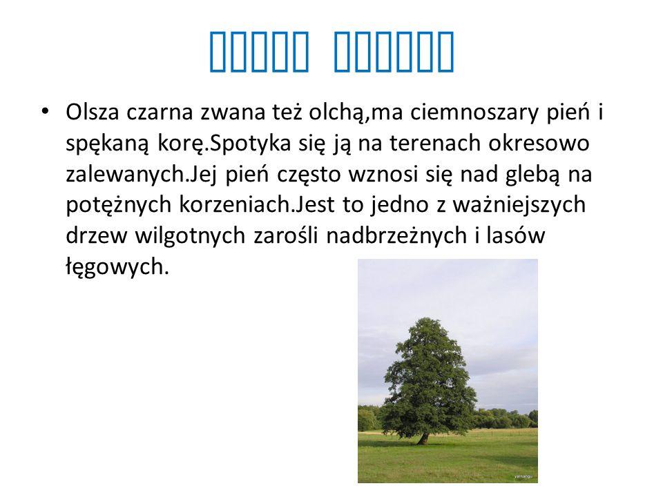 Grab zwyczajny Grab zwyczajny wyróżnia się charakterystyczną korą z licznymi, podłużnymi smugami.Spotyka się go niemal w całej Polsce.