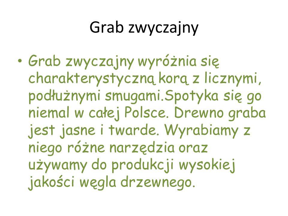 Grab zwyczajny Grab zwyczajny wyróżnia się charakterystyczną korą z licznymi, podłużnymi smugami.Spotyka się go niemal w całej Polsce. Drewno graba je