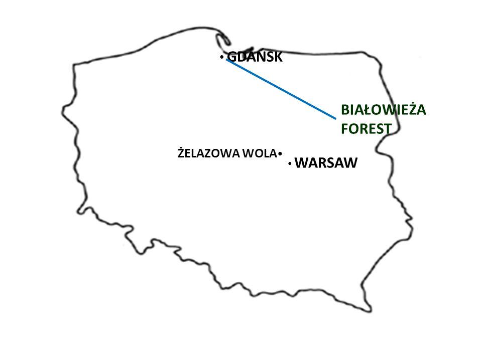WARSAW BIAŁOWIEŻA FOREST GDAŃSK ŻELAZOWA WOLA