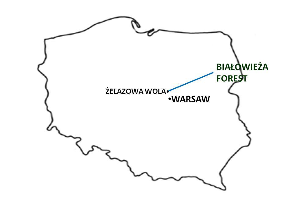 WARSAW BIAŁOWIEŻA FOREST ŻELAZOWA WOLA