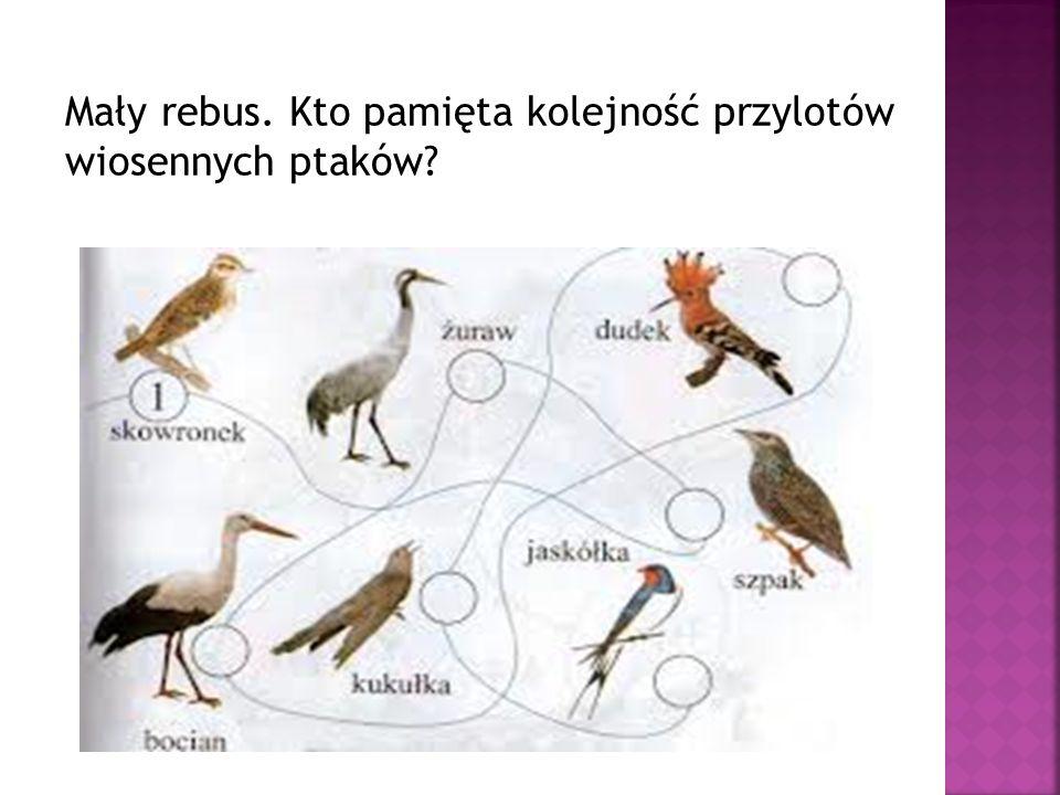 Mały rebus. Kto pamięta kolejność przylotów wiosennych ptaków?