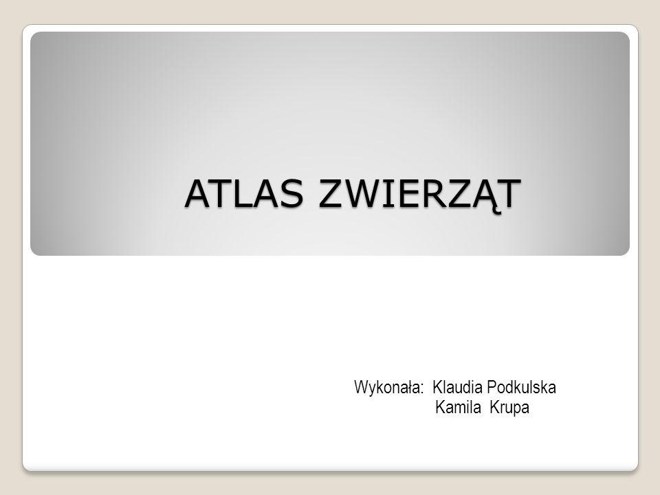 ATLAS ZWIERZĄT ATLAS ZWIERZĄT Wykonała: Klaudia Podkulska Kamila Krupa